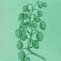 Hops Vine Women's Green Triblend T-Shirt
